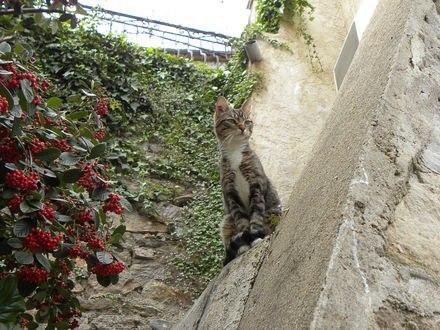Обои Котенок сидит высоко в окне возле ягод на дереве