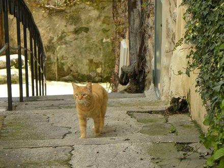 Обои Рыжий кот ходит по дороге