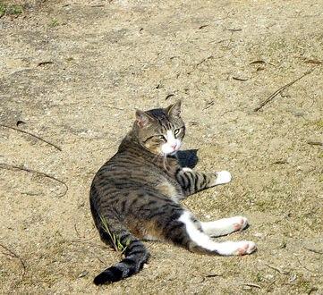 Обои Кот в полоску греется на солнышке
