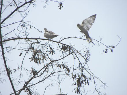 Обои Белые птицы на деревьях на фоне неба