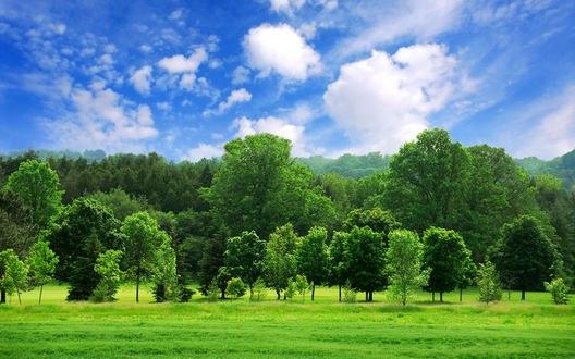 Обои Сочный зеленый лес на фоне синего облачного неба