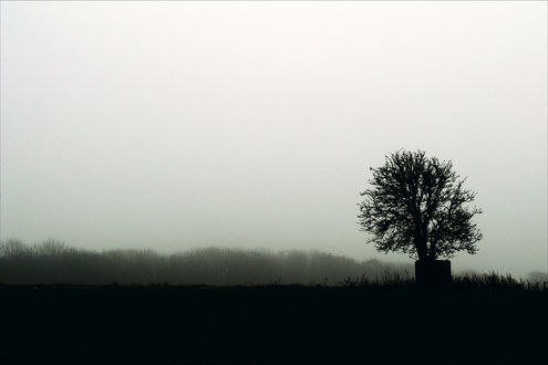 Обои Мрачное дерево без листьев на фоне тумана