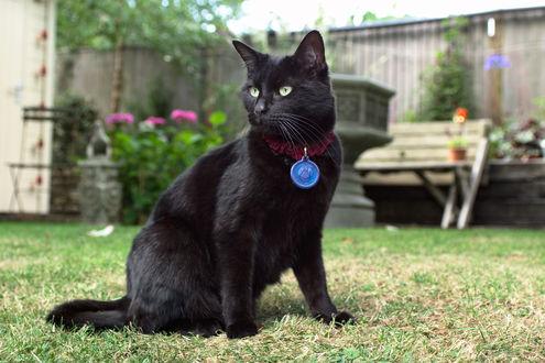 Обои Черный кот сидит на лужайке