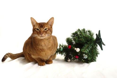 Обои Кот и поваленная новогодняя елочка