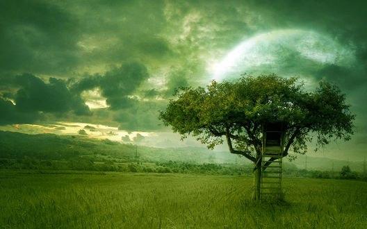 Обои Одинокое дерево с лестницей стоит в поле на фоне неба, облаков и луны, by moroka323