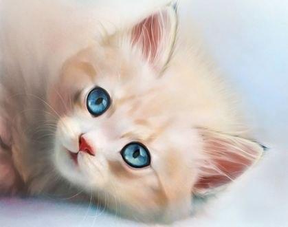 Обои Милый голубоглазый котенок, by Lana Flamy