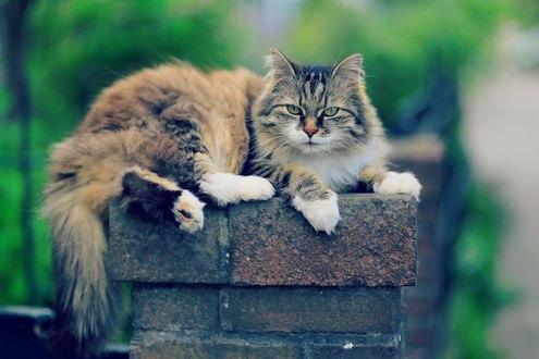 Обои Кот лежит на заборе