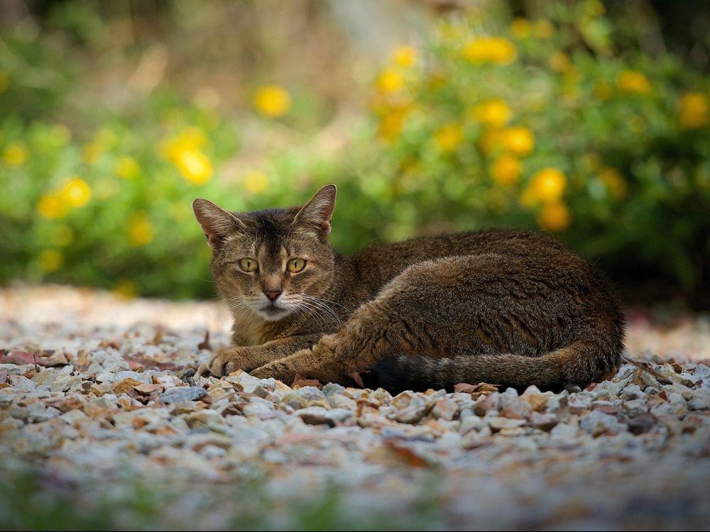 Обои для рабочего стола Кот отдыхает на природе