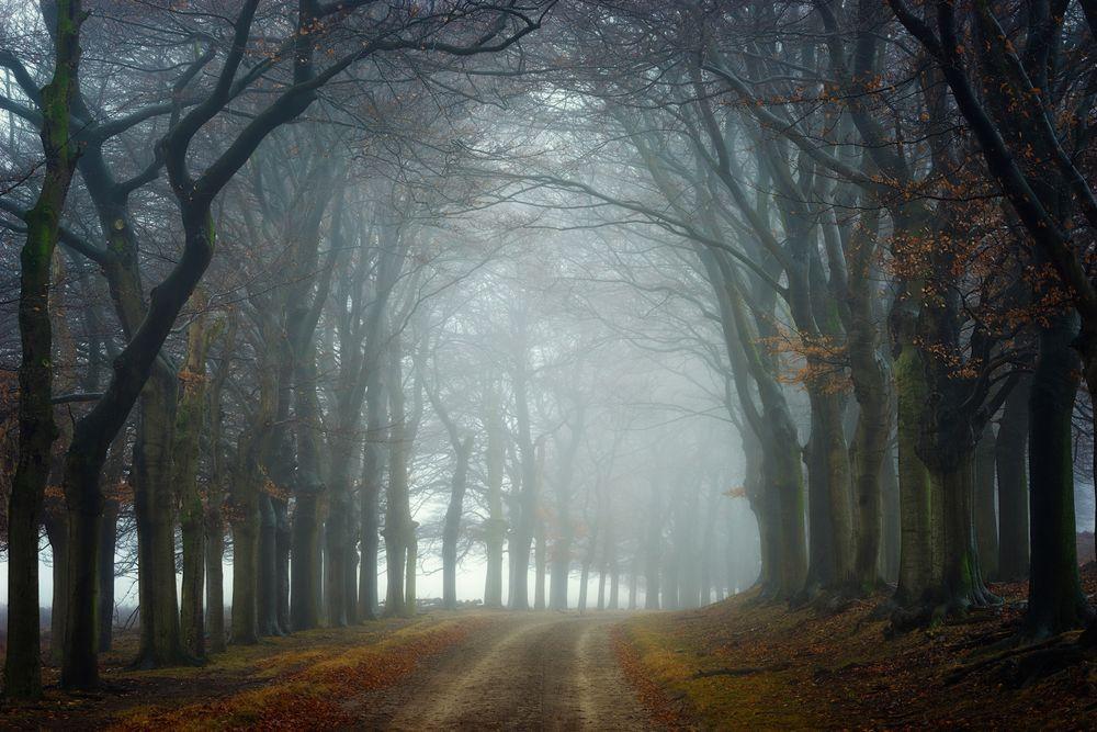 Обои для рабочего стола Грунтовая дорога через осенний парк, уходящая в туман