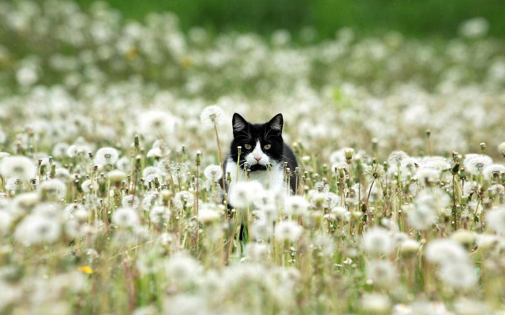Коты в поле фото