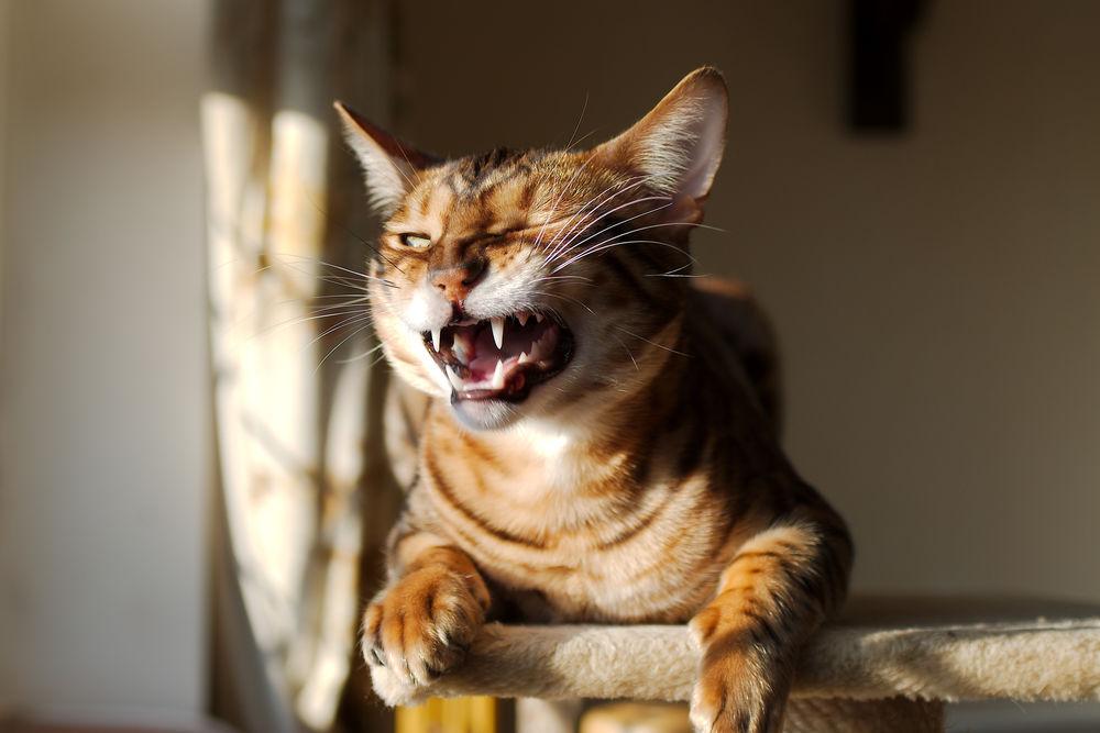 Смешные картинки с улыбающимися котами, надписью