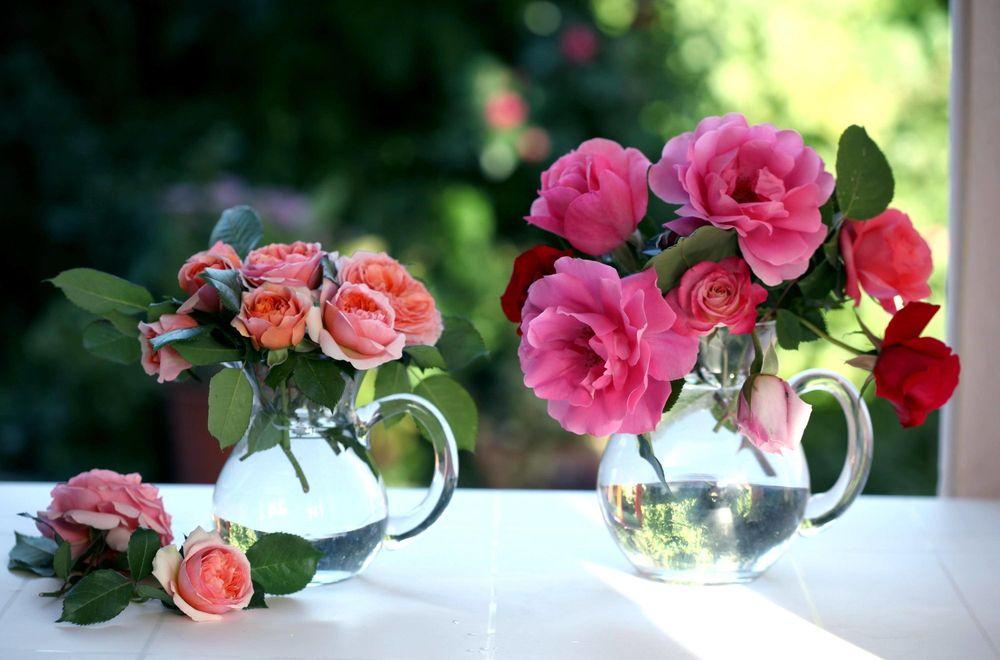 Чайные розы красивые картинки 6