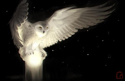 Обои Сова с луной в лапах в ночном небе, by GaudiBuendia
