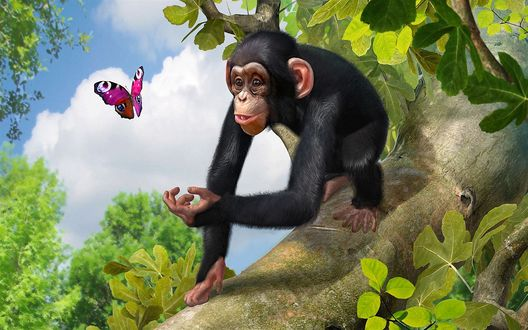 Обои Обезьяна сидя на ветке дерева, протянула руку к летящей бабочке