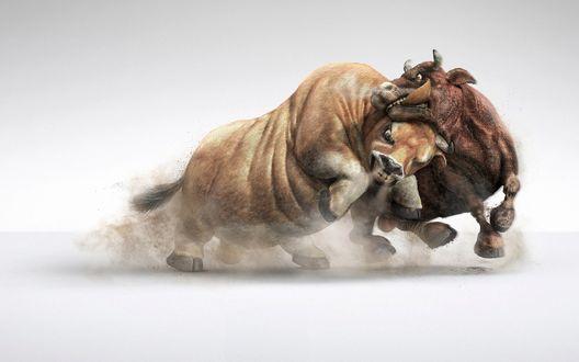 Обои Схватка двух разъяренных быков