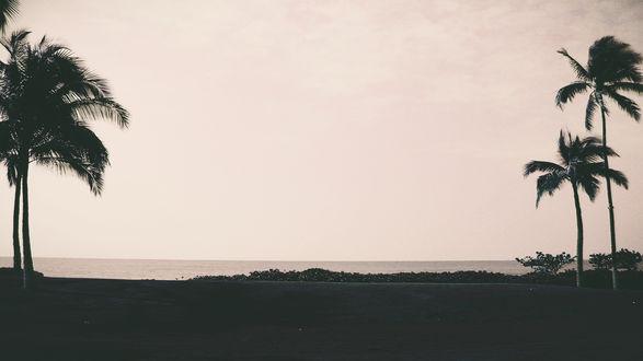 Обои Темные силуэты пальм на побережье, на фоне розоватого неба