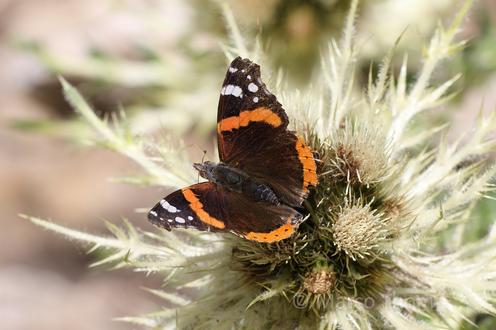 Обои Бабочка сидит на растении, на размытом фоне