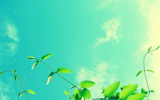 Обои Зеленое растение, освещаемое солнцем, на фоне голубого неба