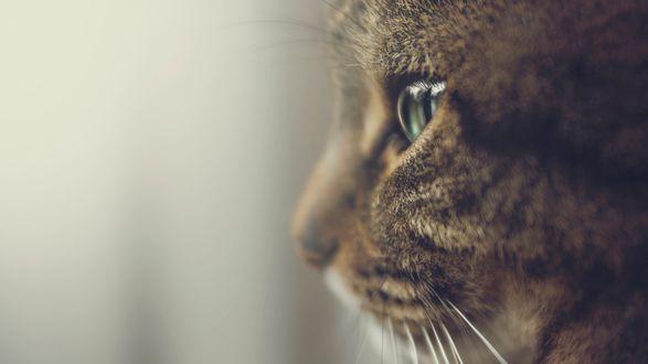 Обои Морда кота крупным планом на размытом фоне