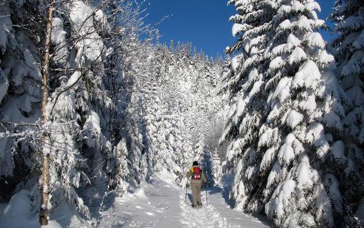 Обои Лыжник идет на лыжах по засыпанному снегом лесу