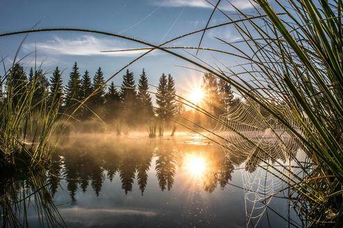 Обои Над озером туман, яркое солнце, но низкое, паутина на камыше. Фотограф Аско Куйттинен (Asko Kuittinen)