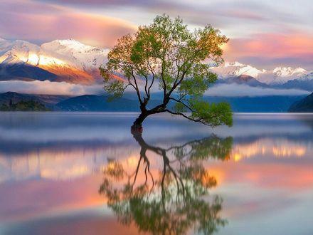 Обои Одинокое дерево, вокруг него вода, вдали видны горы. Новая Зеландия. Фотограф Йохан Лолос (Johan Lolos)