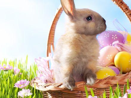 Обои Разноцветные пасхальные яйца и кролик в корзинке, на фоне травы и розовых цветов