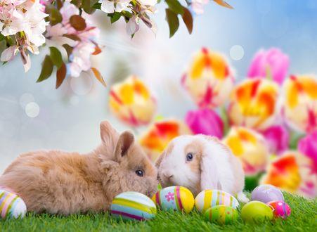 Обои Два милых кролика лежат на траве, под цветущей веточкой, рядом с ними разноцветные пасхальные яйца, на размытом фоне с тюльпанами