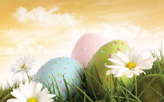Обои Разноцветные пасхальные яйца в крапинку, на траве с цветами, на фоне неба и облаков