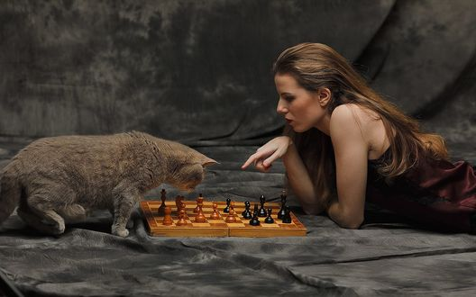 Обои Девушка с котом перед шахматами, фотограф Полин
