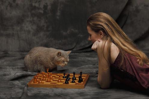 Обои Девушка и кот перед шахматами, фотограф Полин