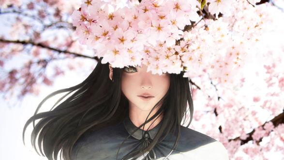 Обои Девушка с длинными темными волосами среди цветущих ветвей сакуры, by Adiim