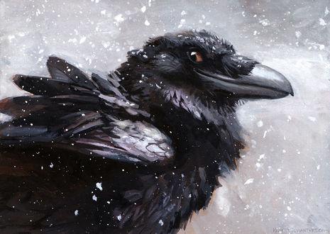 Обои Ворон под падающим снегом улыбается, by kenket