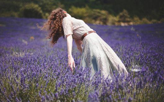 Обои Девушка на лавандовом поле, фотограф Sirеliss