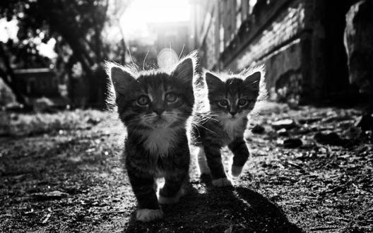 Обои Полосатые котята на улице города, фотограф Дмитрий Самиков