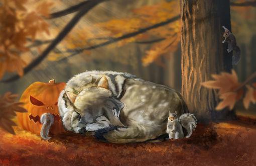 Обои Белки окружили спящего волка в осеннем лесу, by Zary-CZ