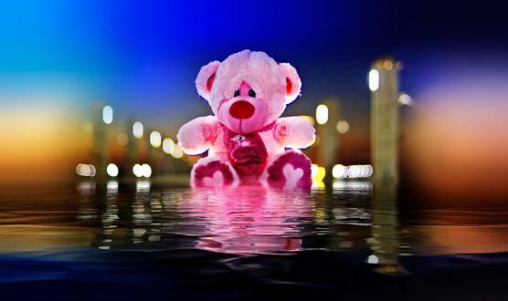 Обои Мишка Тедди на воде, by Nasser Osman