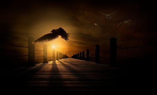 Обои Чайки, летающие над пирсом, by Nasser Osman