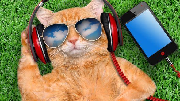 Обои Кот лежит на траве, в наушниках, в очках и со смартфоном