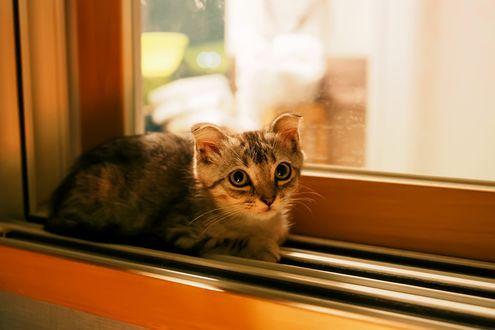 Обои Котенок сидит на подоконнике окна, фотограф S. H. Kim