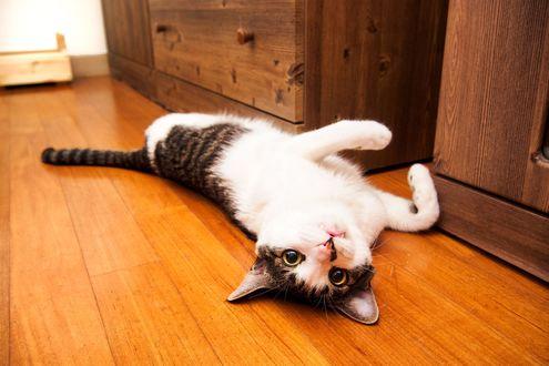 Обои Кот лежит на полу, фотограф S. H. Kim