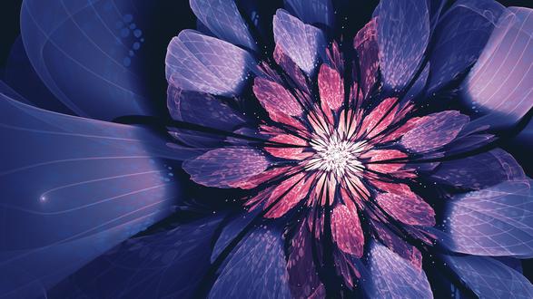 Обои Графический рисунок цветка