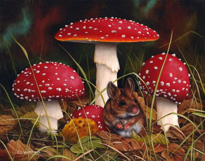 Обои Полевая мышь сидит у мухоморов мухоморы, художник Carl Whitfield