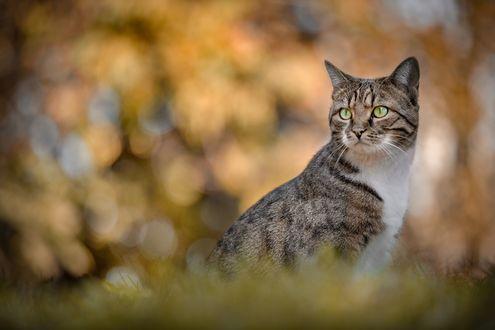 Обои Полосатый кот на природе