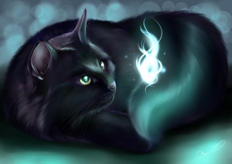 Обои Черная кошка смотрит на что-то светящееся, by Martith