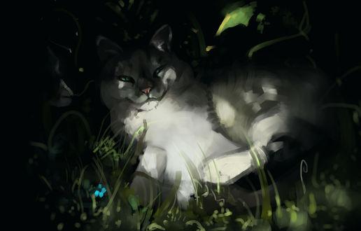 Обои Довольный кот лежит в теньке, by SalamanDra-S