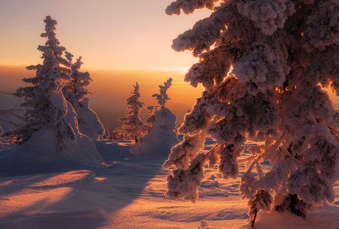 Обои Знойное солнце зимы, фотограф marateaman