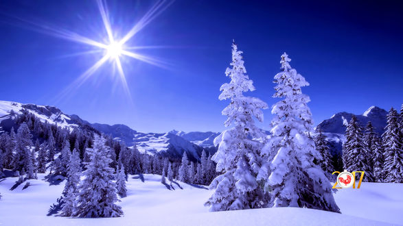 Обои Яркое солнце на фоне зимнего леса (2017)