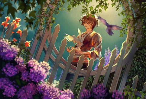 Обои Парень с голубями, by Алисса Миллер