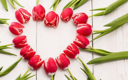 Обои Бело-красные тюльпаны выложены в форме сердца на деревянной поверхности
